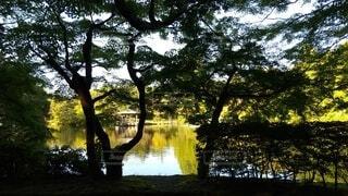 晴れた日の公園の写真・画像素材[4942043]