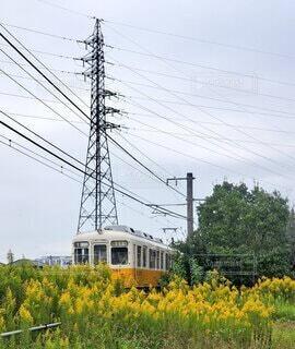 空,花,屋外,電車,黄色,鉄塔,樹木,電線,送電線,鉄道,草木