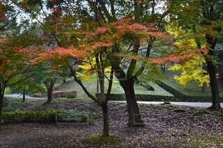 空,公園,秋,紅葉,屋外,カラフル,葉,草,樹木,落葉,草木,カエデ