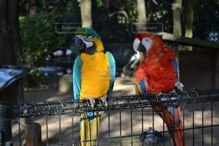 動物,鳥,屋外,樹木,カラー,コンゴウインコ