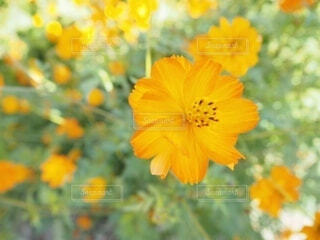 オレンジの花の写真・画像素材[4938670]