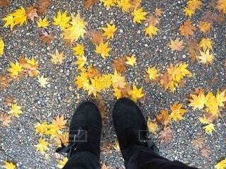 黄色いモミジと黒い靴の写真・画像素材[4941511]