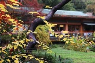 雨に濡れた木と建物の写真・画像素材[4941704]
