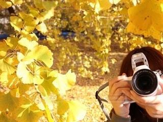 イチョウの葉とカメラ女子の写真・画像素材[4944959]
