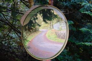 森林の山道を映すカーブミラーの写真・画像素材[4953918]