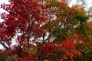 木のクローズアップの写真・画像素材[4955661]