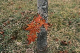 木の隣にある消火栓の写真・画像素材[4955660]