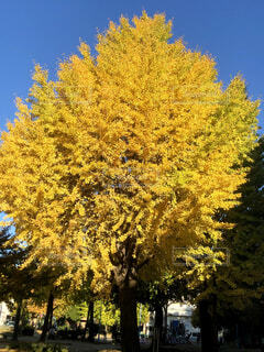 空,公園,花,秋,紅葉,屋外,黄色,樹木,カラー,草木
