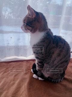 外を見つめるピピ殿の写真・画像素材[4935315]