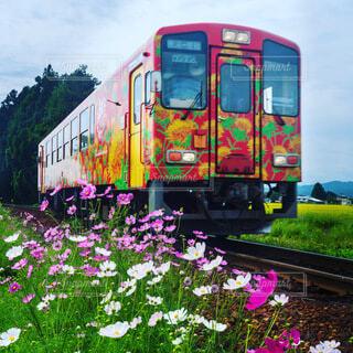空,花,屋外,草,鉄道,草木,車両