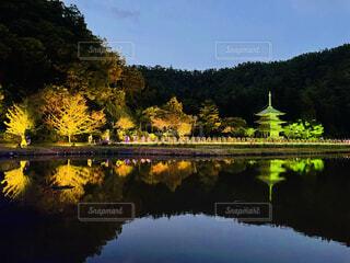 秋のライトアップの写真・画像素材[4935894]
