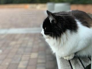 猫,自然,動物,屋外