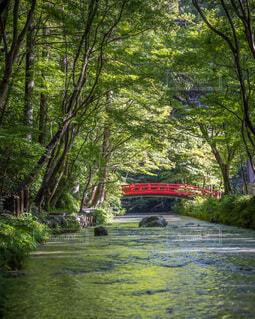 新緑と赤い橋の写真・画像素材[4940273]