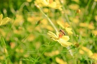 花,蜂,草木