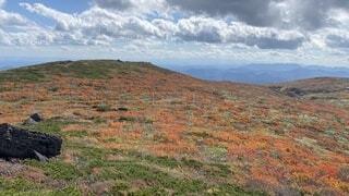 背景に山がある大きな緑の畑の写真・画像素材[4938448]
