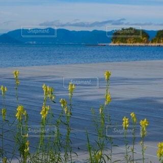 島の風の写真・画像素材[4947407]