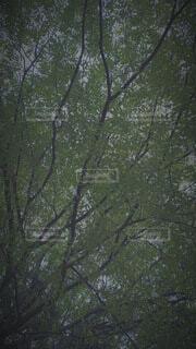 私の好きな景色の写真・画像素材[4939065]