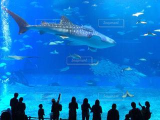 バック グラウンドで沖縄美ら海水族館と水の中の魚の群れの写真・画像素材[1021405]