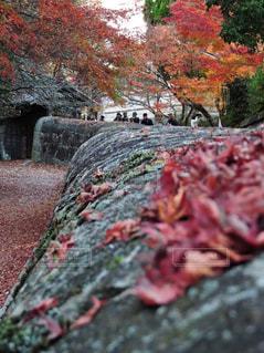 秋,紅葉,観光,岡山,旧閑谷学校,晴れの国 おかやま