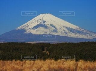 ススキの向うに秋の富士山の写真・画像素材[4943275]