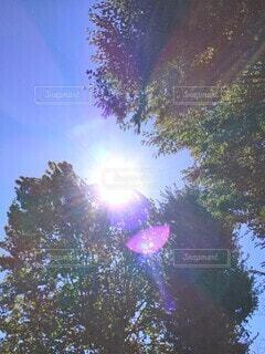 樹の葉のむこう側の太陽の写真・画像素材[4944603]