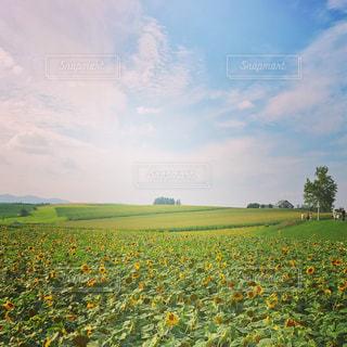 緑豊かな緑のフィールドに立っている人の写真・画像素材[892260]