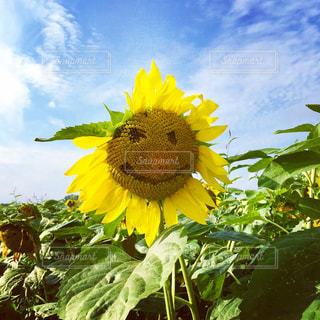 緑の葉と黄色の花の写真・画像素材[1390562]