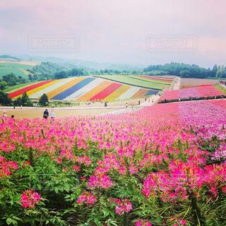 野原の黄色い花の写真・画像素材[2383286]