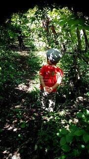 森の中の木の写真・画像素材[4955366]