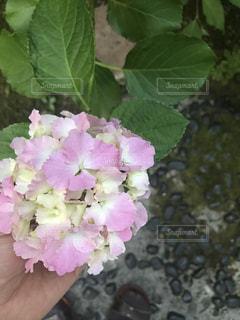 花の写真・画像素材[545907]
