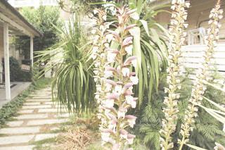 庭の植物の写真・画像素材[2433819]