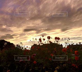 黄金色の夕暮れ 𖥕の写真・画像素材[2445761]