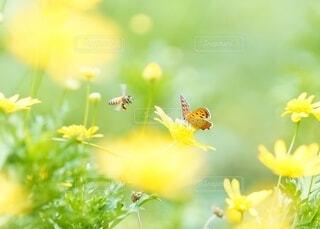 花にとまる蝶々と遊びにきたミツバチの写真・画像素材[4954138]