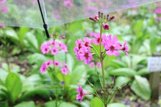 花のクローズアップの写真・画像素材[2171084]