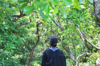 木の隣に立っている人の写真・画像素材[3139925]