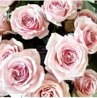 近くの花のアップの写真・画像素材[1388563]