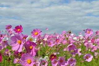 花のクローズアップの写真・画像素材[4952547]