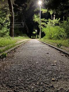 真っ直ぐ続く緑の中の夜道の写真・画像素材[4952810]