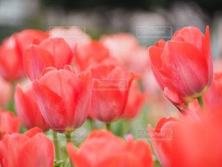 花の写真・画像素材[528504]