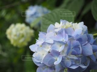 花の写真・画像素材[536982]