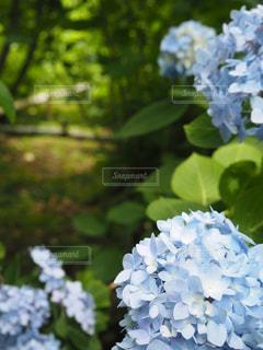 花の写真・画像素材[548407]