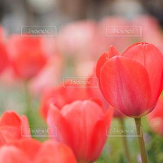 近くの花のアップの写真・画像素材[1902915]