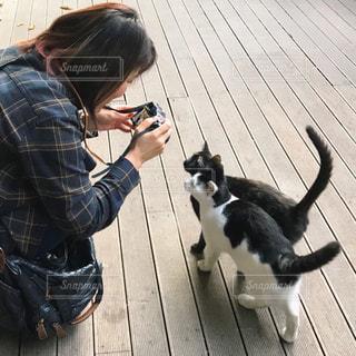 女性,1人,猫,カメラ,動物,撮影,ペット,人物,ネコ