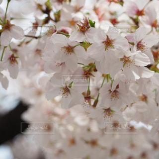 花のクローズアップの写真・画像素材[3041431]
