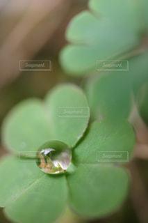 近くの緑の植物をの写真・画像素材[821321]