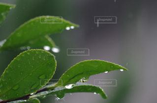 近くの緑の植物をの写真・画像素材[826627]