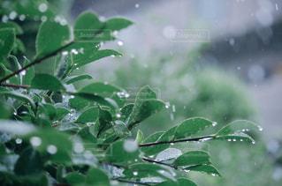 木の枝にとまる小鳥の写真・画像素材[826628]