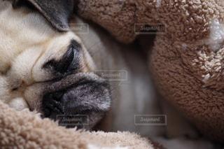近くに犬のアップの写真・画像素材[874594]