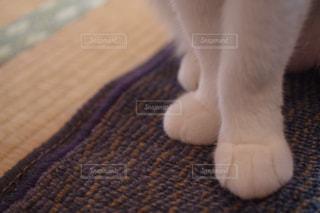 近くに猫のアップの写真・画像素材[976028]