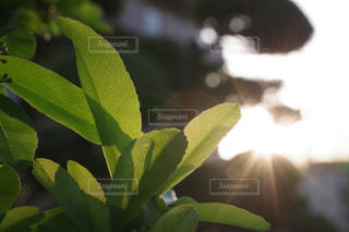 近くの緑の植物をの写真・画像素材[1158024]